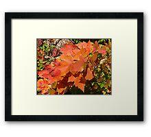 Maple Leaves Framed Print