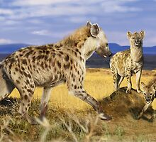 SPOTTED HYAENA 6 EDITED by DilettantO