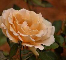 'A TRIBUTE TO THE ROSE' by Magaret Meintjes