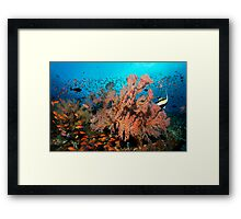 Living Sea Framed Print