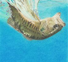 diving fish by cavewoman