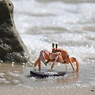 Ghost  Crab by James Parker