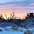 Morning on the Mojave by Herman Hodges