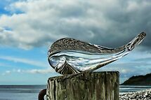Beached Whale by Susie Peek