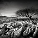 Limestone Pavement Mono by Jeanie