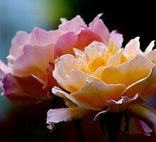 2 roses... by Allan  Erickson