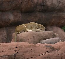 Sleeping Lioness by Colin Harper by Mike Oxley