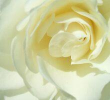 Vanilla by Jess Mo