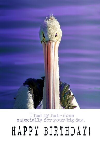 Happy Birthday from Mr. Pelican by Holly Kempe