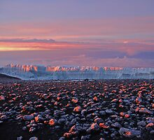 Sunrise on the glaciers of Mt Kilimanjaro, AFRICA. by Paul Stewart