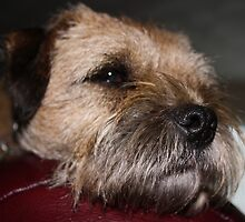 Cold Wet Nose by PeterBez