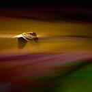 hawk by sparrowdk