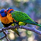 Kissing Red-Collared Lorikeets by Frank Falco