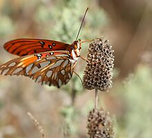 Butterfly Posing on a Dry Flower Head by ElyseFradkin