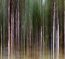 forest in motion by Charlie Watkins