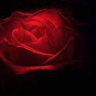 red red rose by Cate Davies