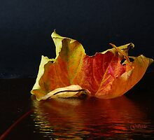 Autumn Leaf reflected by Gilberte