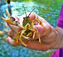 Hello Crawdaddy by Raquel Perryman