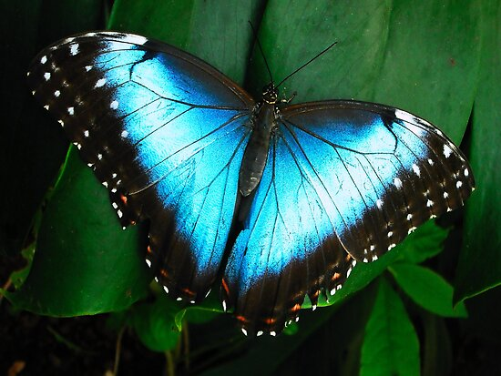 Azure Wings by Dawn B Davies-McIninch