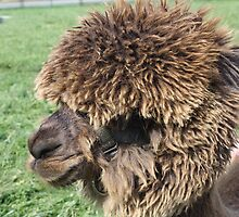 Fluffy Face by Devon Stewart