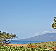 Honoapiilani  Beach - Island of Lanai by sandra greenberg