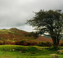 Tree and Torr by Gary Heald LRPS