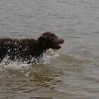 Dogs Having Fun by Camberleigh Myers