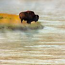 LONE BULL by Sandy Stewart