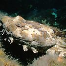 Banded Wobbegong by Erik Schlogl