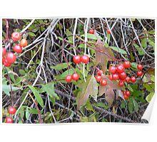 Hi-Bush Cranberries Poster