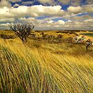 marram inlet.... by David Murphy