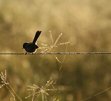 Bird on a wire by DavidWRJ