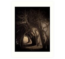 ancient yew Art Print