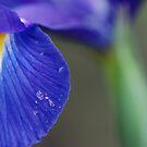 indigo blue by Tamara Cornell
