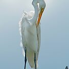Egret at Grand Isle by Bonnie T.  Barry