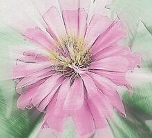 Pink Zinnia  by Rainy