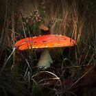 De wondere wereld van paddenstoelen by steppeland