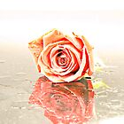 Over Exposed Rose by ea-photos
