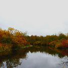 Autumn Splendor, Misapassqua River,Sask.Canada. in Oct by MaeBelle