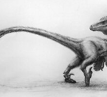Raptor rendering by Dana Sibera