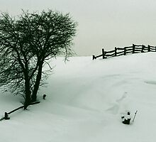Abstract Tree and Fence - Winter by DMHImages