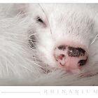 Rhinarium by Marie-Agnes