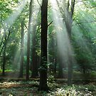 More forest enchantment in September 2009 by jchanders