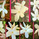 WHITE JASMINE. by the6tees