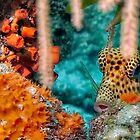 Trunk Fish by jnhPhoto
