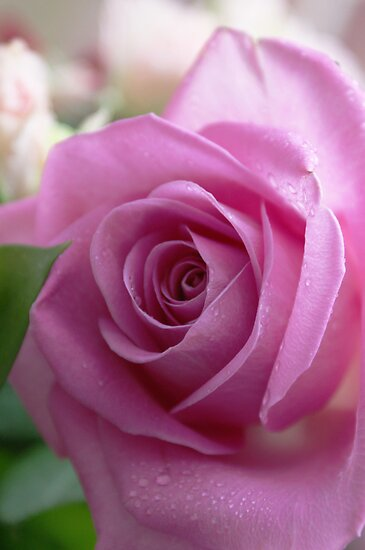 Perfectly Pink. by bared