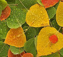 Aspen Colors by Steve  Taylor
