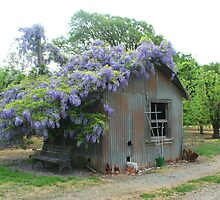 Wysteria Roof by riverangel51