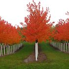 Fall has arrived at the tree farm by DPKDesign