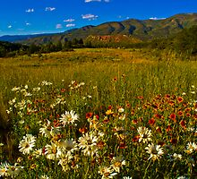 A Mountain Wildflower Paradise by Roschetzky